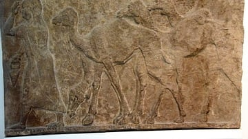 Captured Camels from Arab Enemies of Tiglath-pileser III