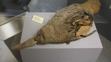 Egyptian Mummified Ibis