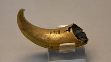 Gold Horn from Tell Al-Ubaid