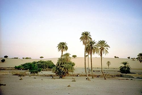 Mao Oasis, Chad (by Notrchad, CC BY-SA)