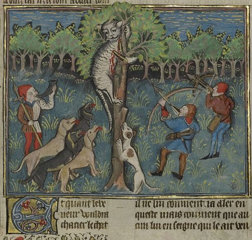 A Hunter & Dogs Attacking a Treed Wild Cat