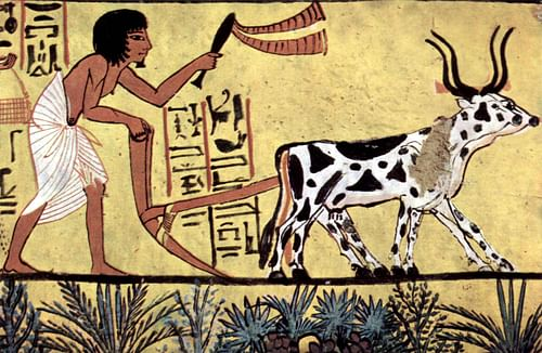 Plowing Egyptian Farmer