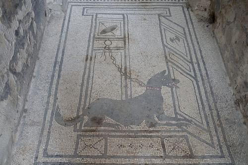 Dog Mosaic in the House of Paquius Proculus in Pompeii