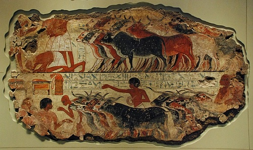 Egyptian Cattle Herd