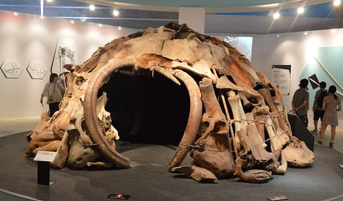 Replica of a Mammoth-bone Structure