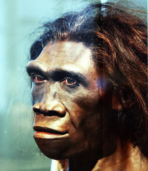 Reconstruction of Homo Erectus Adult Female Head (by Tim Evanson, CC BY-SA)