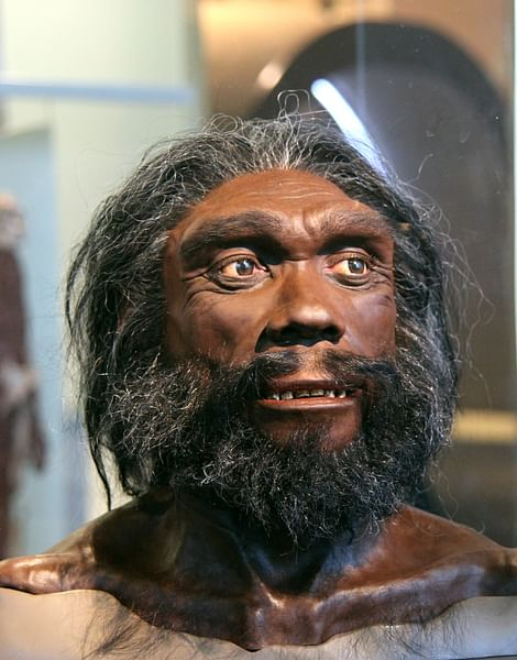 Homo Heidelbergensis Reconstruction (by Tim Evanson, CC BY-SA)