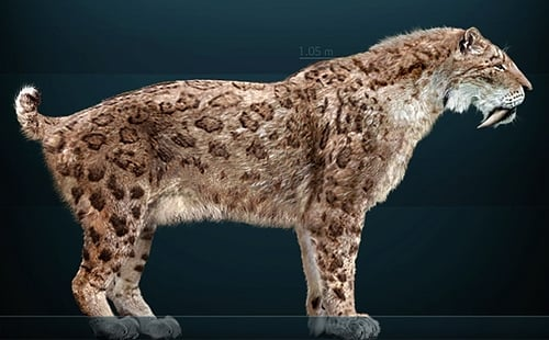 Sabre-toothed Cat Smilodon fatalis