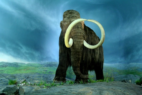 Wooly Mammoth (by Tracy O, CC BY-SA)