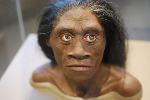 Homo Floresiensis Reconstruction (by Karen Neoh)