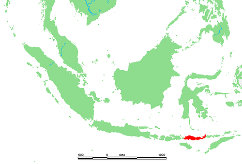 Location of the Island of Flores, Indonesia