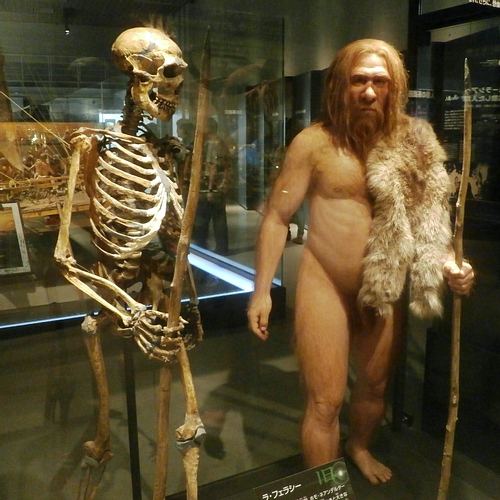 Neanderthal Skeleton & Reconstruction