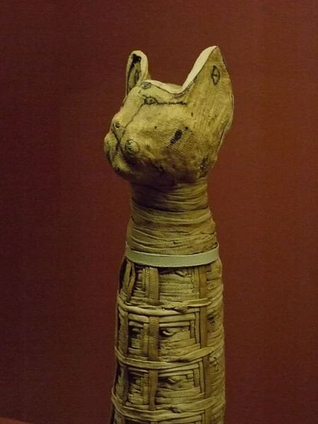 Cat Mummy