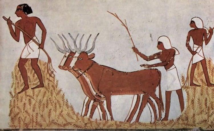 Herodotus on Animal Sacrifice in Egypt - Ancient History Encyclopedia