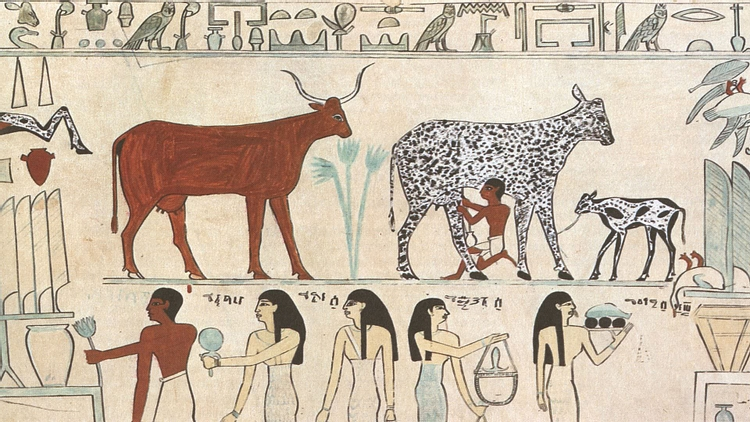 Early domestication of cattle
