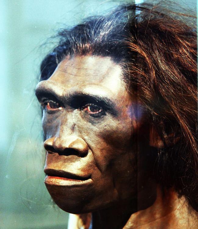 Reconstrucción de la cabeza de la hembra adulta de Homo Erectus (Tim Evanson)