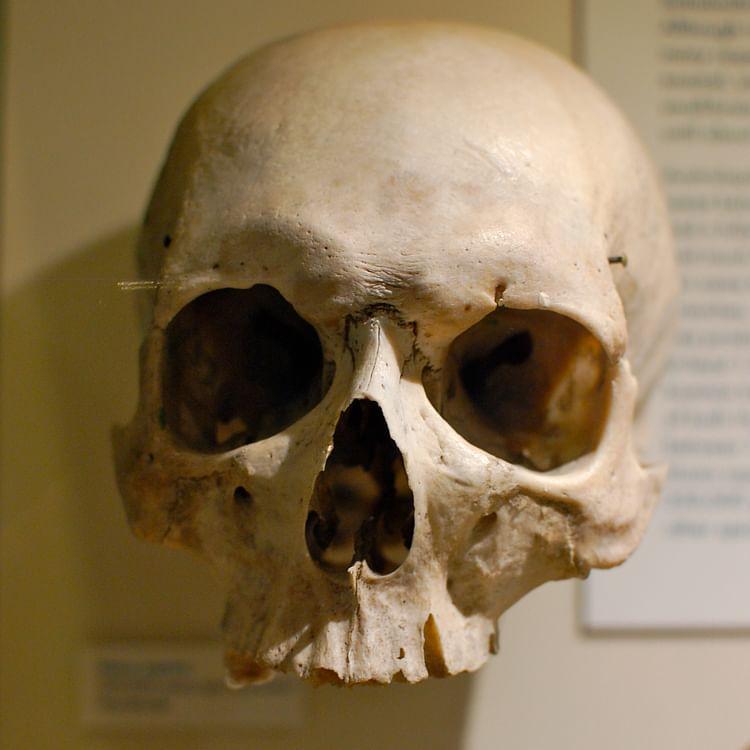 Homo Sapiens Skull (Chris Devers)