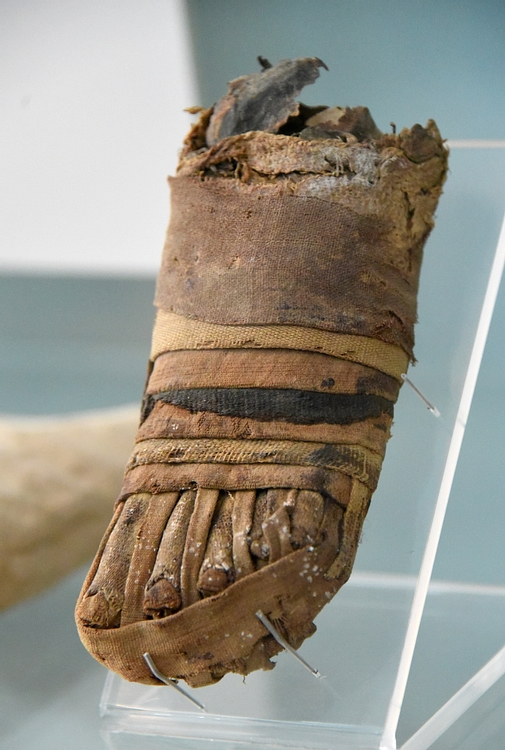 Mummified Left Foot of a Child