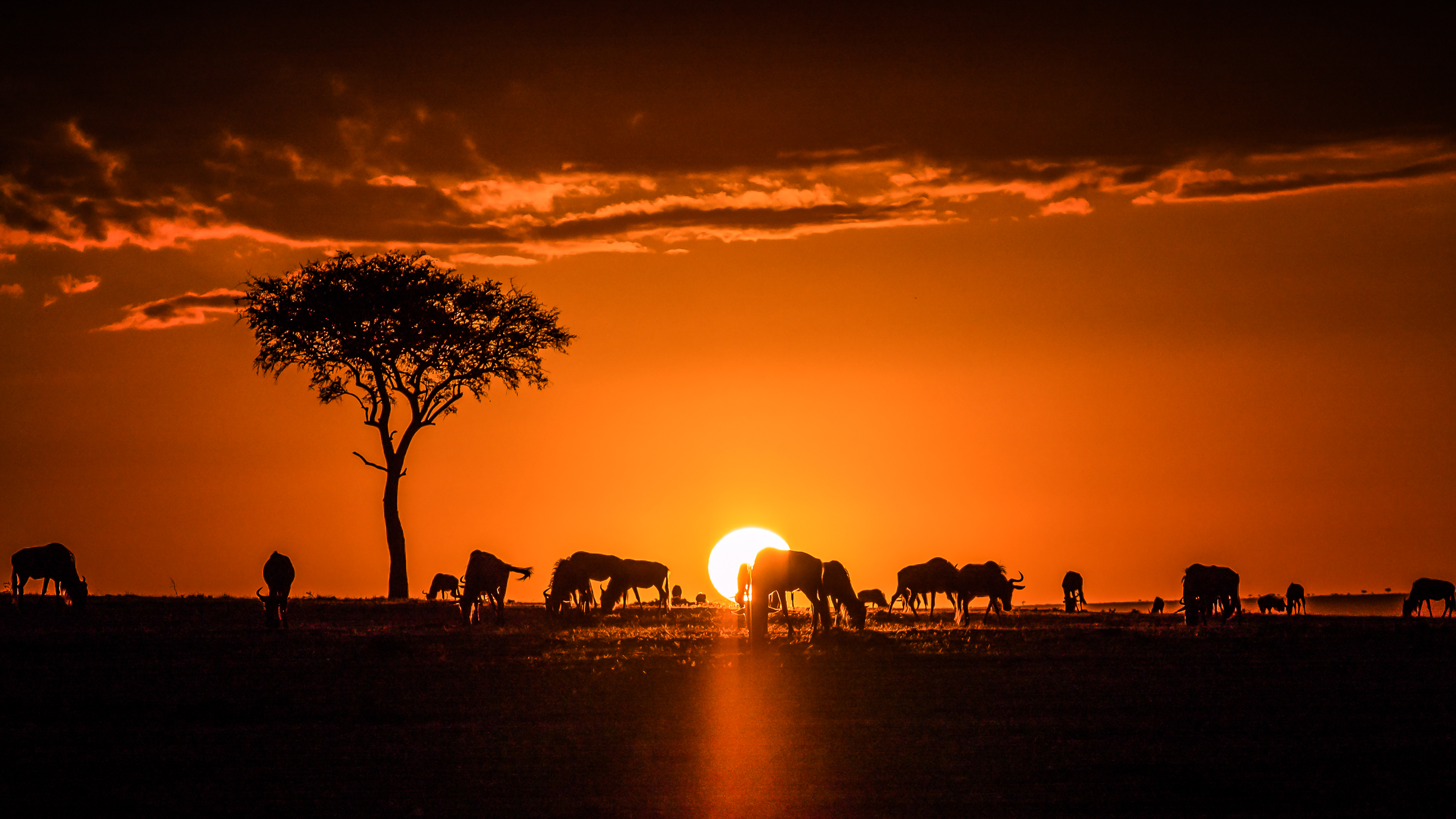 Sunrise in the Maasai Mara (Illustration) - Ancient History Encyclopedia
