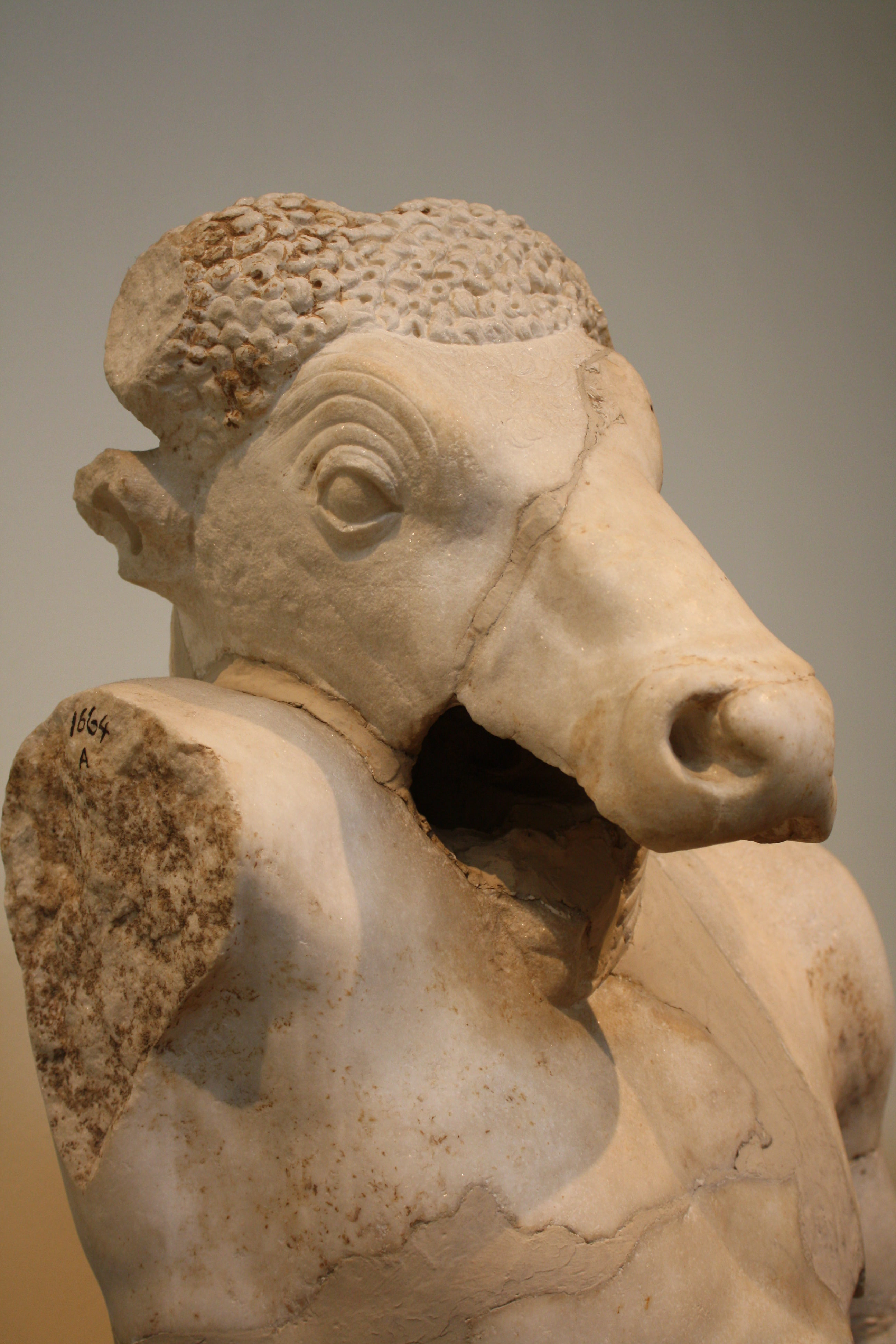 Minotaur ancient history encyclopedia in greek mythology the minotaur was a monster with the body of a man and the head and tail of a bull the minotaur was the offspring of the cretan queen buycottarizona