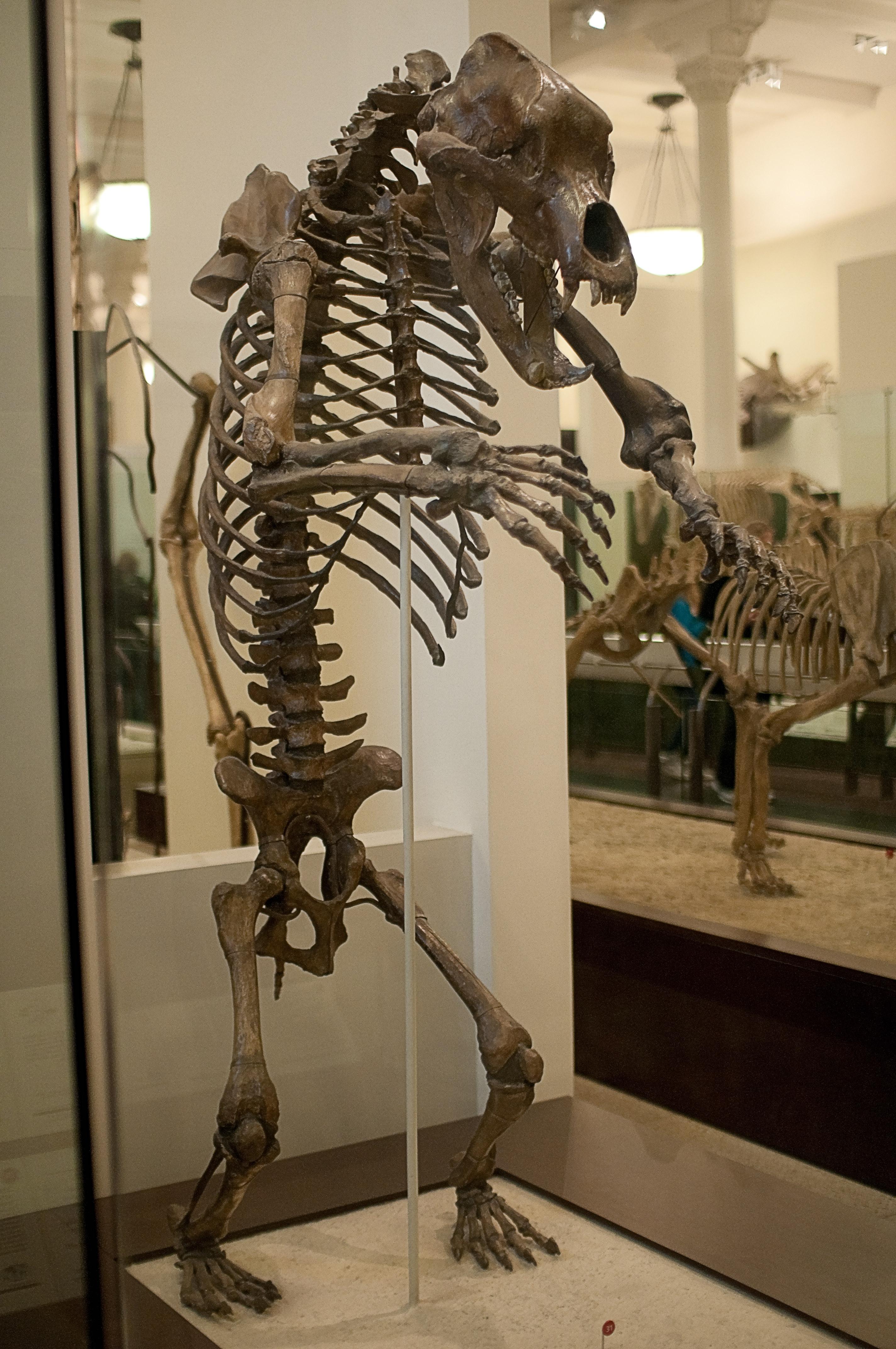 Скелет человека с мышцами фото основном