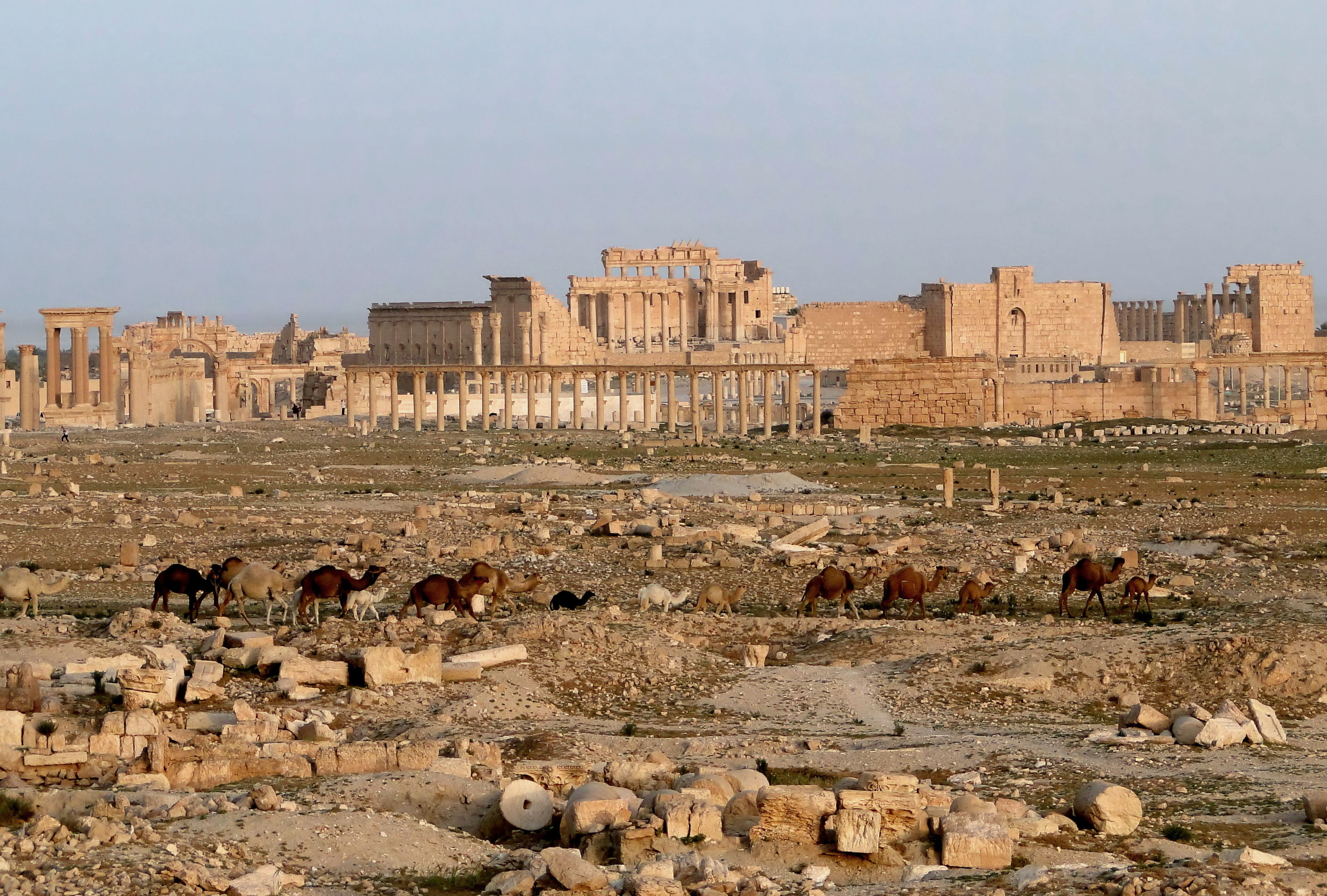 urbanization history encyclopedia palmyra