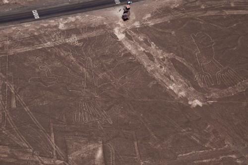 Nazca Line Cactus