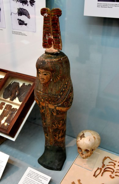 Cartonnage Mummy Case Amp Skeleton Of A Child With A Rare