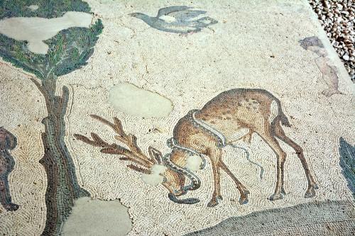 Stag & Snake, Byzantine Mosaic