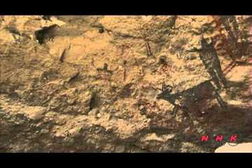 Rock Paintings of the Sierra de San Francisco (UNESCO/NHK)