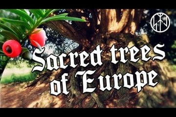 Sacred Trees of Europe